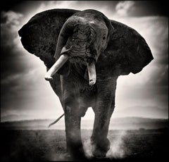 POWER II, Kenya, Elephant, b&w photography, Africa, Portrait