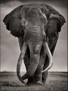 Preserver of peace I, Kenya, Elephant