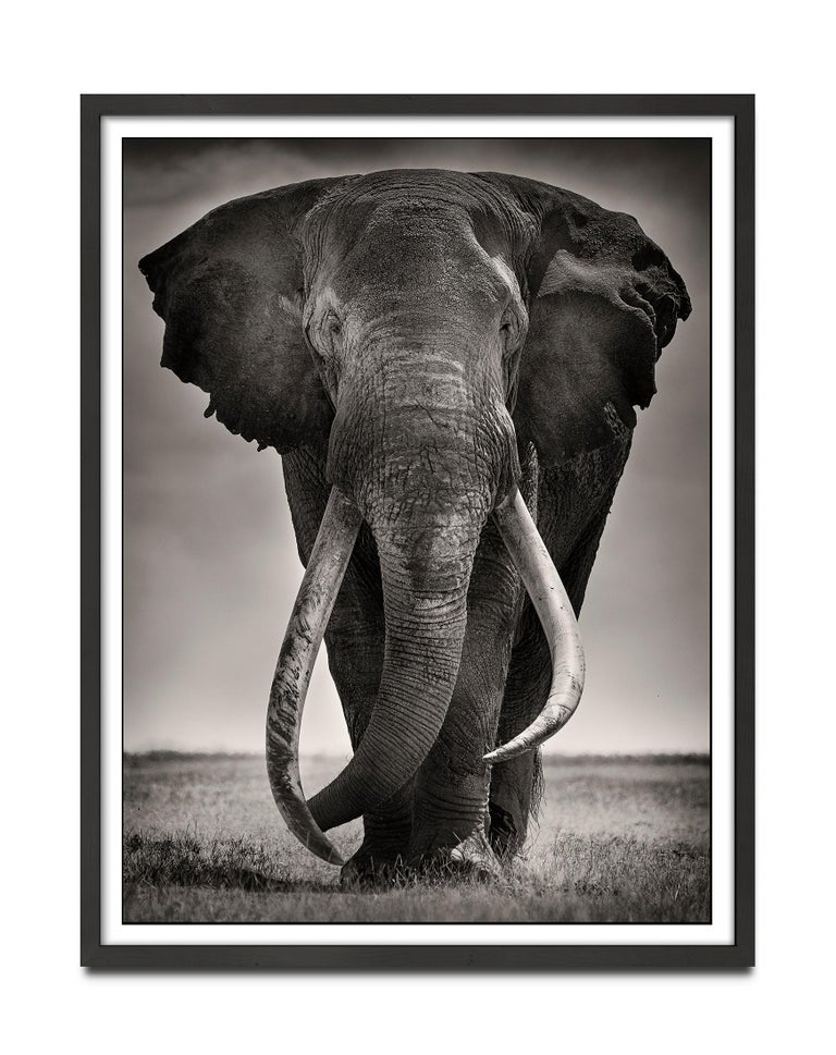 Preserver of peace I, Kenya, Elephant, b&w photography, Wildlife - Photograph by Joachim Schmeisser