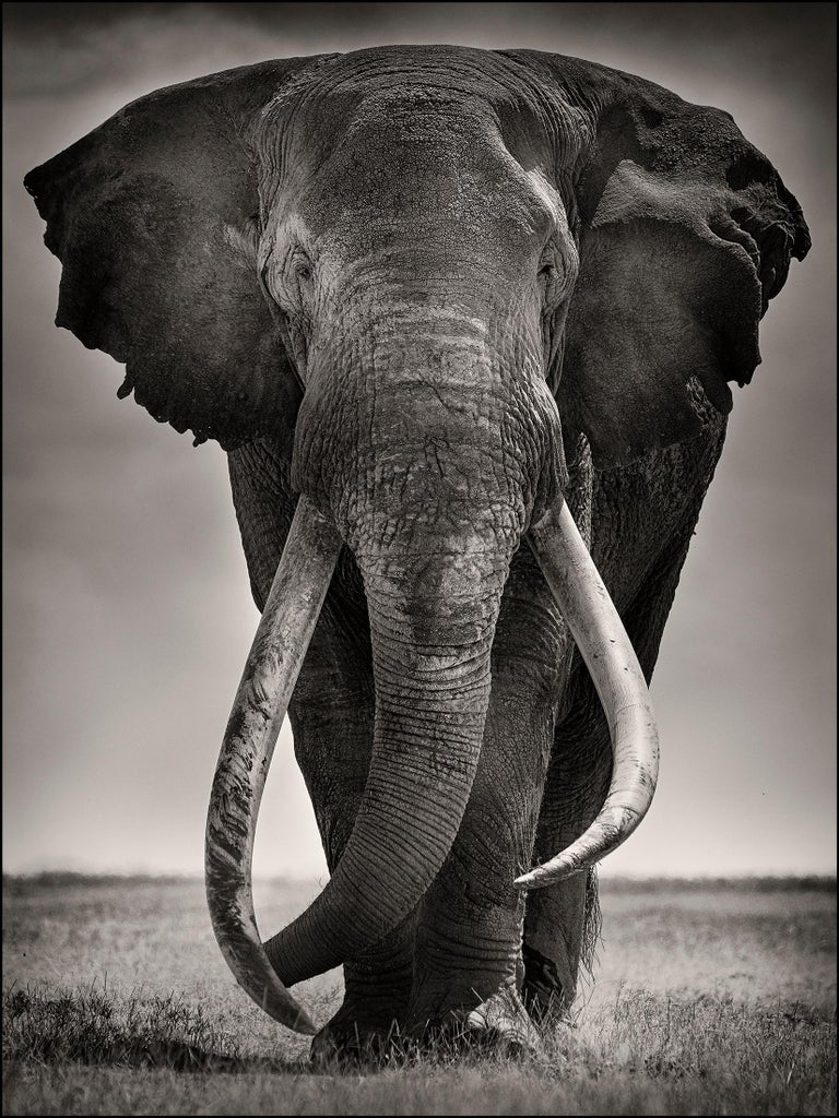 Joachim Schmeisser Black and White Photograph - Preserver of peace I, Kenya, Elephant, b&w photography, Wildlife