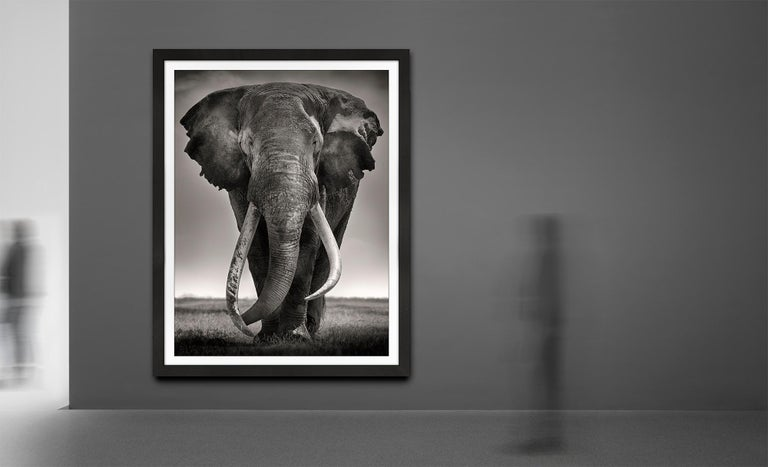 Preserver of peace I, Kenya, Elephant, b&w photography, Wildlife - Contemporary Photograph by Joachim Schmeisser