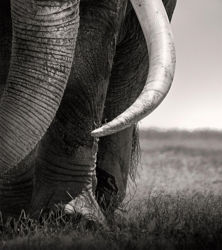 Preserver of peace I, Kenya, Elephant, b&w photography, Wildlife For Sale 1