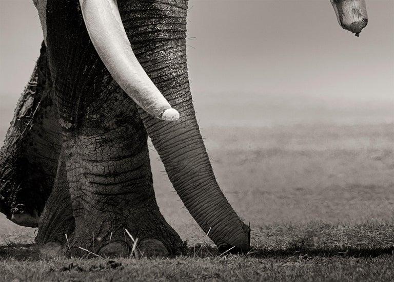 Primo, Kenya, Elephant, b&w photography, wildlife For Sale 2