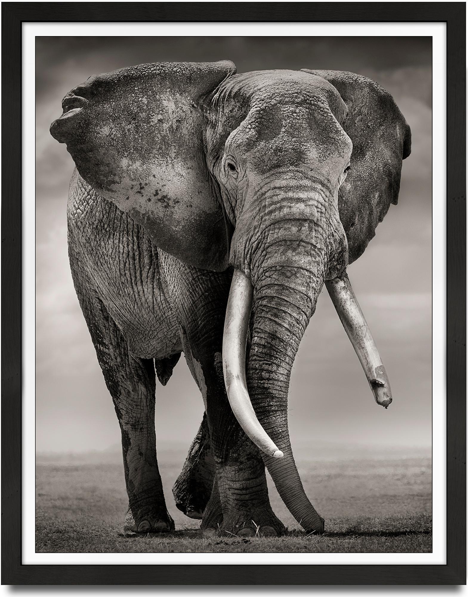 Primo, Kenya, Elephant, b&w photography, wildlife