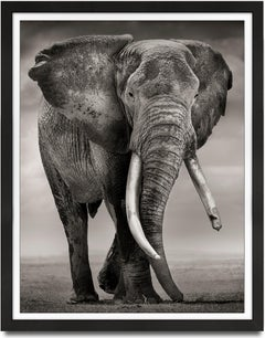 Primo, Kenya, Elephant, b&w photography, wildlife