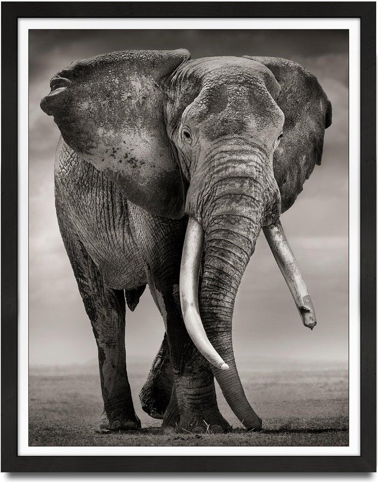 Joachim Schmeisser Black and White Photograph - Primo, Kenya, Elephant, b&w photography, wildlife