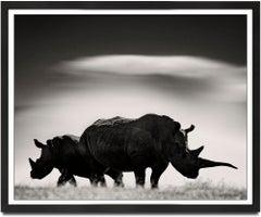 Rhino couple in front of Mount Kenya, Kenya, wildlife, b&w photography