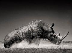 Rise I, Kenya 2019, Rhino, wildlife, b&w photography
