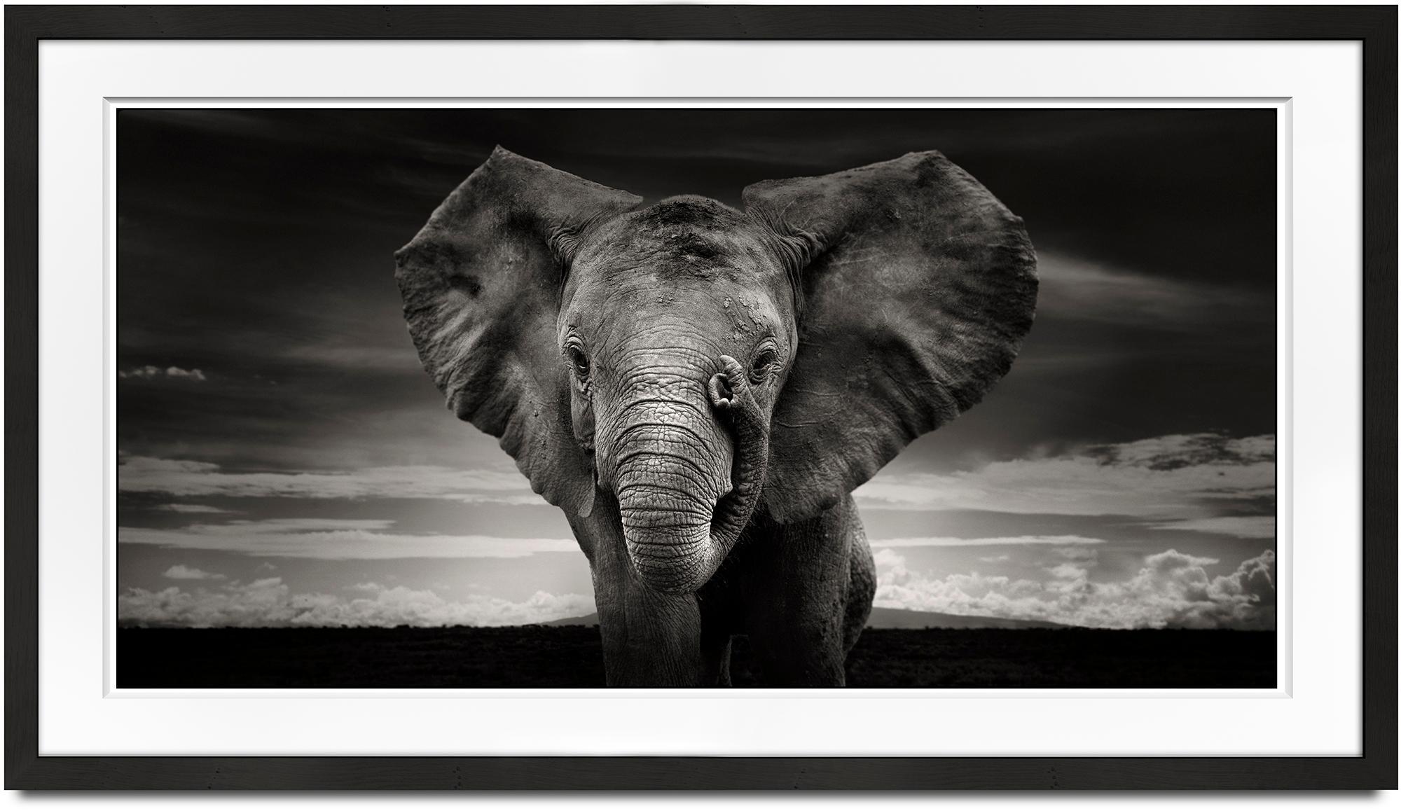 Sabachi, Kenya, Elephant, black and white photography, wildlife