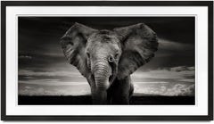 Sabachi, Kenya, Elephant, black and white photography, wildlife