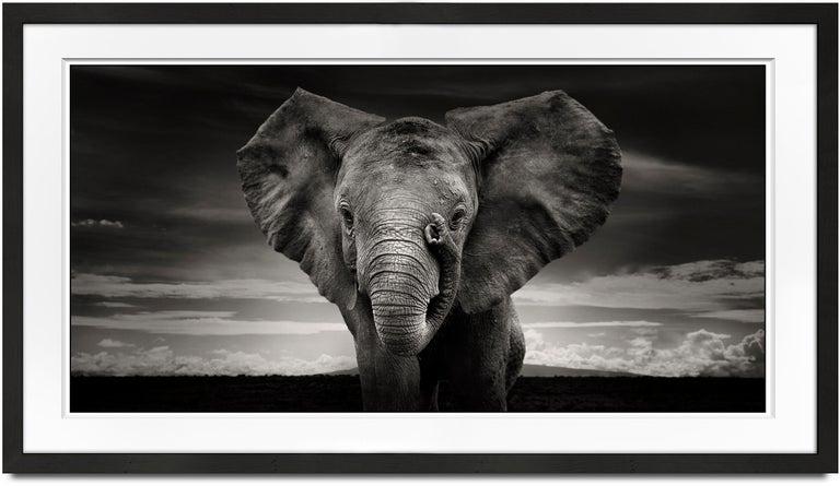 Joachim Schmeisser Portrait Photograph - Sabachi, Kenya, Elephant, black and white photography, wildlife