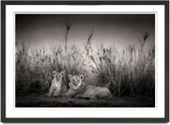 Sarabi + Simba, Kenya, Lion, wildlife, b&w photography