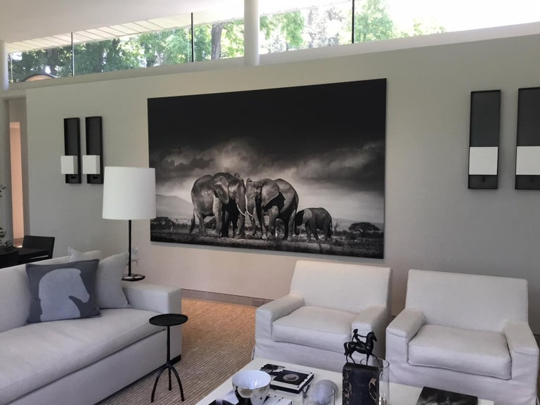 Searching for salt, Kenya, Elephant, Wildlife, landscape, b&w For Sale 2
