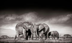 Searching for salt, Kenya, 21st century, contemporary, wildlife, Fine Art Print