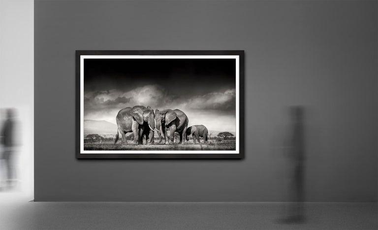 Searching for salt, Kenya, Elephant, Wildlife, landscape, b&w - Black Black and White Photograph by Joachim Schmeisser