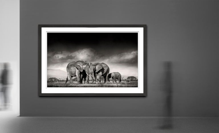 Edition of 5 more sizes on request  This was a very qualm and intimate moment, when this little family was searching for salt and other minerals in the barren ground of the Amboseli National Park, Kenya. The little calf seeked shelter under his