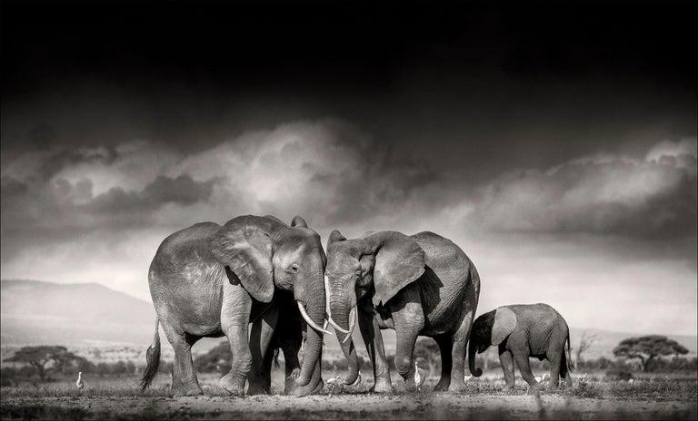 Searching for salt, Kenya, Elephant, Wildlife, landscape, b&w - Photograph by Joachim Schmeisser