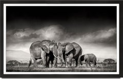 Searching for salt, Kenya, Elephant, Wildlife, landscape, b&w