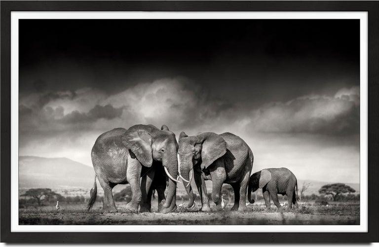 Joachim Schmeisser Black and White Photograph - Searching for salt, Kenya, Elephant, Wildlife, landscape, b&w