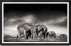 Searching for salt, Kenya, Elephant, Wildlife, landscape, b&w