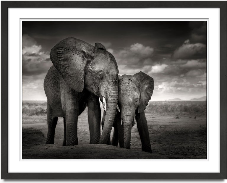 Soulmates, Elephant, black and white photography, wildlife - Photograph by Joachim Schmeisser