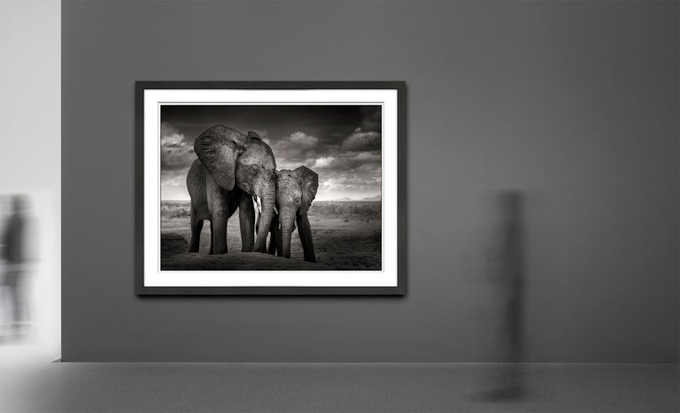 Soulmates, Elephant, black and white photography, wildlife - Contemporary Photograph by Joachim Schmeisser