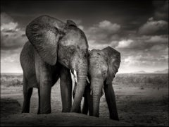 Soulmates, Elephant, black and white photography, wildlife