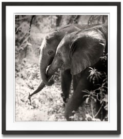 Soulmates II, Kenya, elephant, wildlife, b&w photography