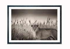 Successor, Kenya 2017, contemporary, wildlife, b&w photography