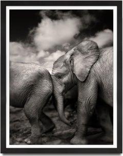 Suguta, Kenya, Elephant, black and white photography, wildlife