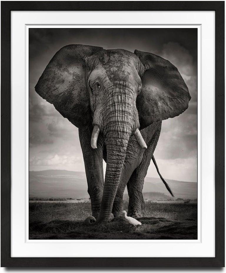 The Bull and the Bird III, Kenya, Elephant, wildlife, b&w photography - Photograph by Joachim Schmeisser