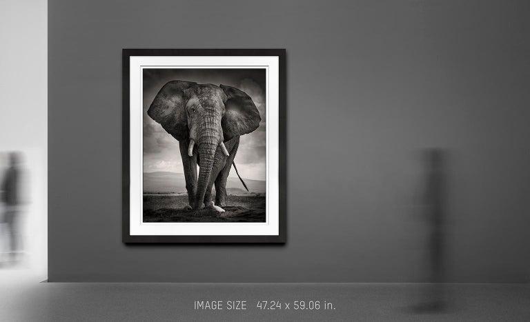 The Bull and the Bird III, Kenya, Elephant, wildlife, b&w photography - Contemporary Photograph by Joachim Schmeisser