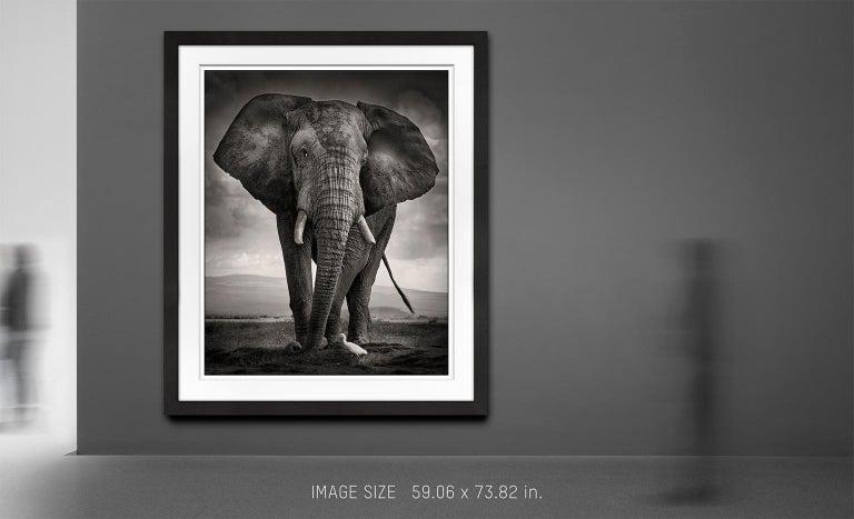 The Bull and the Bird III, Kenya, Elephant, wildlife, b&w photography - Black Portrait Photograph by Joachim Schmeisser