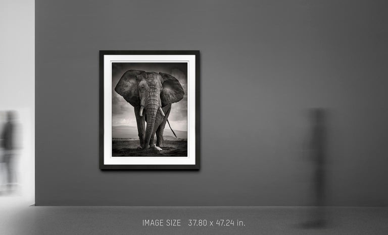 Limited Edition of 5 available in different sizes  A portrait of a massive Elephant Bull in Amboseli National Park. In front of him a small egret is passing by.  For years, Joachim Schmeisser has been photographing the last giants of Africa at