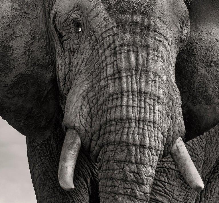 The Bull and the Bird III, Kenya, Elephant, wildlife, b&w photography For Sale 1