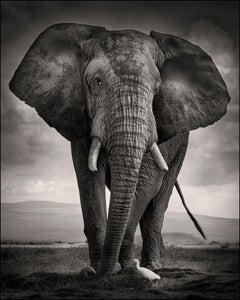 The Bull and the Bird III, Kenya, Elephant, wildlife, b&w photography
