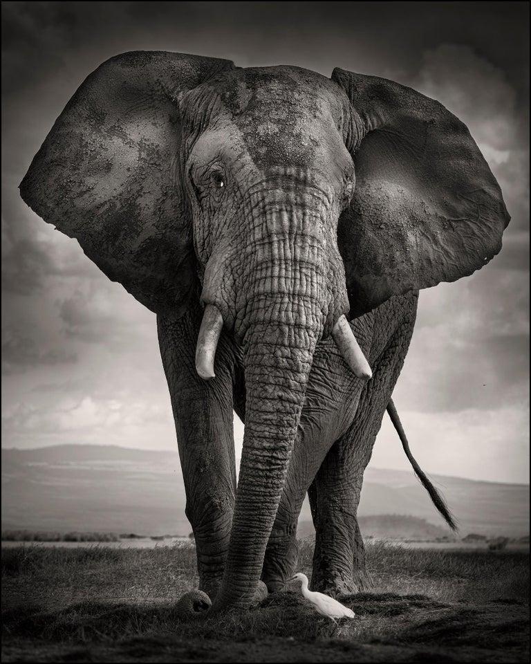 Joachim Schmeisser Portrait Photograph - The Bull and the Bird III, Kenya, Elephant, wildlife, b&w photography
