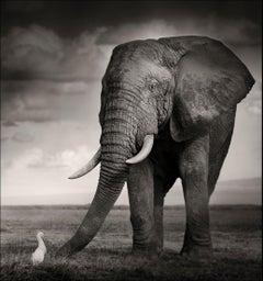The Bull and the Bird, Kenya, Elephant, wildlife, b&w photography