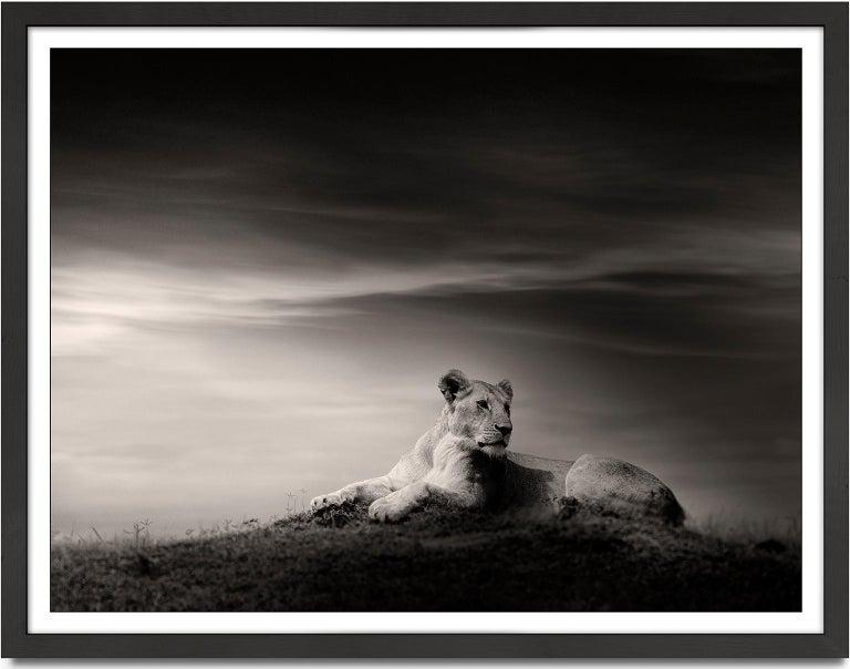 The Lioness, Lion, blackandhwite photography, Africa, Portrait, Wildlife - Photograph by Joachim Schmeisser