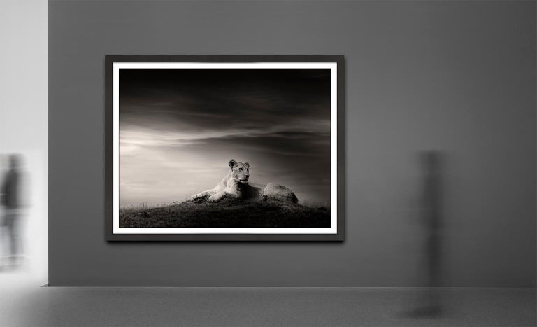 The Lioness, Lion, blackandhwite photography, Africa, Portrait, Wildlife - Contemporary Photograph by Joachim Schmeisser