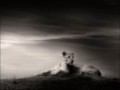 The Lioness, Lion, blackandhwite photography, Africa, Portrait, Wildlife