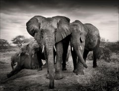 The magnificent Seven Kenya - Platinum Palladium Print, Elephant
