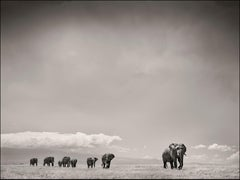 The Matriarch, Elephant, wildlife