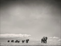 The Matriarch, Elephant, wildlife