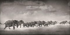 Thunderstorm I, Kenya 2019, Elephant, wildlife, b&w photography