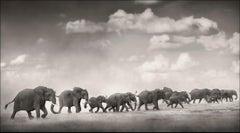 Thunderstorm II, Kenya, Elephant, wildlife, b&w photography