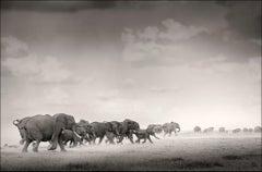 Thunderstorm III, Kenya, Elephant, wildlife, b&w photography