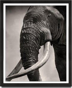 Tim Eye to Eye, Kenya, Elephant, b&w photography