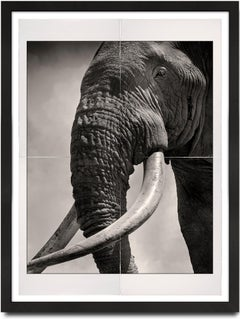 Tim - Eye to Eye, Platinum Palladium, Hall of Giants Series