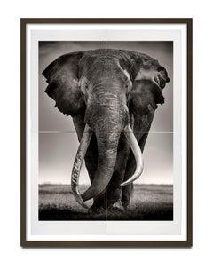 Tim - Preserver of Peace , Kenya, Elephant, Photography, Platinum Palladium